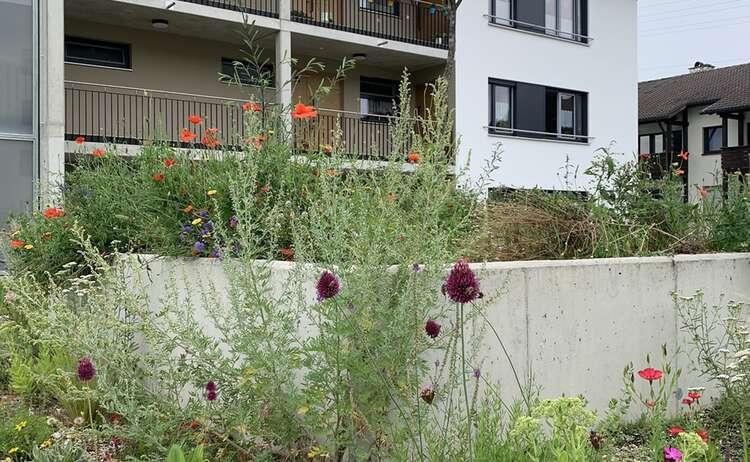 Blumenwiese-Piding6