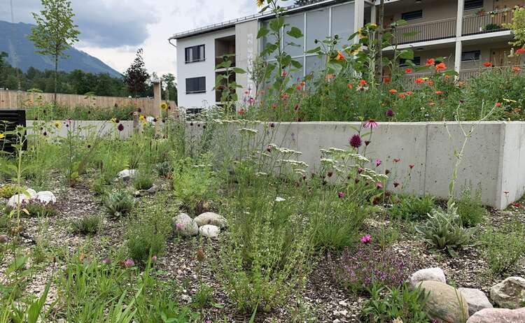 Blumenwiese Piding im Juli 2020