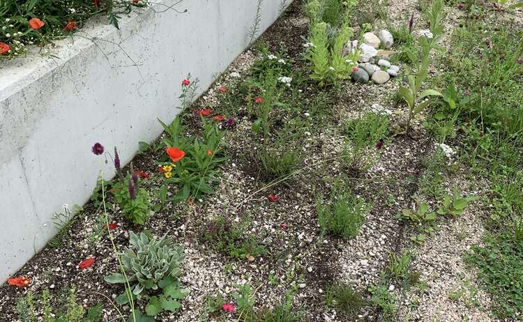 Blumenwiese-Piding8