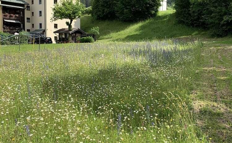 Blumenwiese Winkl 1