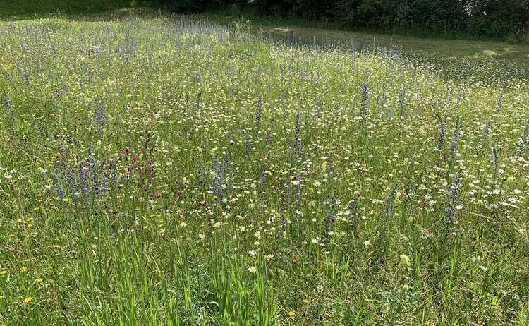 Blumenwiese Winkl 2